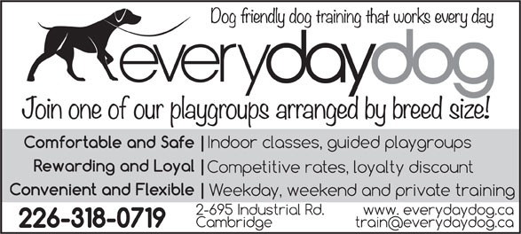 Everyday Dog (519-620-8176) - Display Ad -