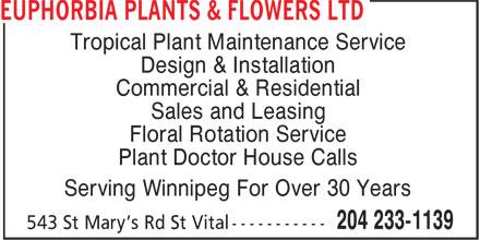 Euphorbia Plants And Flowers Ltd Euphorbia Plants Amp Flowers Ltd