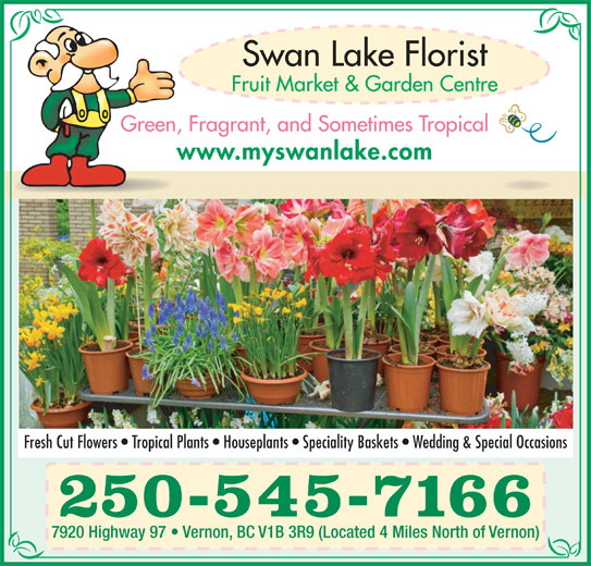 Swan Lake Florist (250-545-7166) - Display Ad - Green, Fragrant, and Sometimes Tropical www.myswanlake.com 250-545-7166 7920 Highway 97   Vernon, BC V1B 3R9 (Located 4 Miles North of Vernon) Fresh Cut Flowers   Tropical Plants   Houseplants   Speciality Baskets   Wedding & Special Occasions
