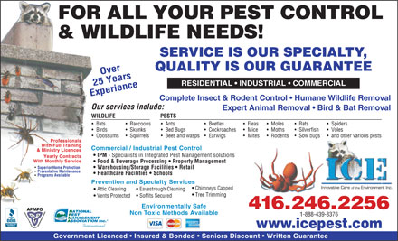 ICE Pest Control &amp; Wildlife (416-246-2256) - Annonce illustr&eacute;e - FOR ALL YOUR PEST CONTROL &amp; WILDLIFE NEEDS! SERVICE IS OUR SPECIALTY, QUALITY IS OUR GUARANTEE Over RESIDENTIAL   INDUSTRIAL   COMMERCIAL 25 Years Experience Complete Insect &amp; Rodent Control   Humane Wildlife Removal Our services include: Expert Animal Removal   Bird &amp; Bat Removal WILDLIFE PESTS Bats Raccoons Ants Beetles Fleas Moles Rats Spiders Birds Skunks Bed Bugs Cockroaches Mice Moths Silverfish Voles Opossums Squirrels Bees and wasps   Earwigs Mites Rodents Sow bugs and other various pests Professionals With Full Training Commercial / Industrial Pest Control &amp; Ministry Licences IPM - Specialists in Integrated Pest Management solutions Yearly Contracts With Monthly Service Food &amp; Beverage Processing   Property Management Superior Home Protection Warehousing/Storage Facilities   Retail Preventative Maintenance Healthcare Facilities   Schools Programs Available Prevention and Specialty Services Chimneys Capped Attic Cleaning Eavestrough Cleaning Tree Trimming Vents Protected Soffits Secured Environmentally Safe 416.246.2256 Non Toxic Methods Available 1-888-439-8376 www.icepest.com Government Licenced   Insured &amp; Bonded   Seniors Discount   Written Guarantee  FOR ALL YOUR PEST CONTROL &amp; WILDLIFE NEEDS! SERVICE IS OUR SPECIALTY, QUALITY IS OUR GUARANTEE Over RESIDENTIAL   INDUSTRIAL   COMMERCIAL 25 Years Experience Complete Insect &amp; Rodent Control   Humane Wildlife Removal Our services include: Expert Animal Removal   Bird &amp; Bat Removal WILDLIFE PESTS Bats Raccoons Ants Beetles Fleas Moles Rats Spiders Birds Skunks Bed Bugs Cockroaches Mice Moths Silverfish Voles Opossums Squirrels Bees and wasps   Earwigs Mites Rodents Sow bugs and other various pests Professionals With Full Training Commercial / Industrial Pest Control &amp; Ministry Licences IPM - Specialists in Integrated Pest Management solutions Yearly Contracts With Monthly Service Food &amp; Beverage Processing   Property Management Superior Home Protection Warehousing/Storage Facilities   Retail Preventative Maintenance Healthcare Facilities   Schools Programs Available Prevention and Specialty Services Chimneys Capped Attic Cleaning Eavestrough Cleaning Tree Trimming Vents Protected Soffits Secured Environmentally Safe 416.246.2256 Non Toxic Methods Available 1-888-439-8376 www.icepest.com Government Licenced   Insured &amp; Bonded   Seniors Discount   Written Guarantee  FOR ALL YOUR PEST CONTROL &amp; WILDLIFE NEEDS! SERVICE IS OUR SPECIALTY, QUALITY IS OUR GUARANTEE Over RESIDENTIAL   INDUSTRIAL   COMMERCIAL 25 Years Experience Complete Insect &amp; Rodent Control   Humane Wildlife Removal Our services include: Expert Animal Removal   Bird &amp; Bat Removal WILDLIFE PESTS Bats Raccoons Ants Beetles Fleas Moles Rats Spiders Birds Skunks Bed Bugs Cockroaches Mice Moths Silverfish Voles Opossums Squirrels Bees and wasps   Earwigs Mites Rodents Sow bugs and other various pests Professionals With Full Training Commercial / Industrial Pest Control &amp; Ministry Licences IPM - Specialists in Integrated Pest Management solutions Yearly Contracts With Monthly Service Food &amp; Beverage Processing   Property Management Superior Home Protection Warehousing/Storage Facilities   Retail Preventative Maintenance Healthcare Facilities   Schools Programs Available Prevention and Specialty Services Chimneys Capped Attic Cleaning Eavestrough Cleaning Tree Trimming Vents Protected Soffits Secured Environmentally Safe 416.246.2256 Non Toxic Methods Available 1-888-439-8376 www.icepest.com Government Licenced   Insured &amp; Bonded   Seniors Discount   Written Guarantee  FOR ALL YOUR PEST CONTROL &amp; WILDLIFE NEEDS! SERVICE IS OUR SPECIALTY, QUALITY IS OUR GUARANTEE Over RESIDENTIAL   INDUSTRIAL   COMMERCIAL 25 Years Experience Complete Insect &amp; Rodent Control   Humane Wildlife Removal Our services include: Expert Animal Removal   Bird &amp; Bat Removal WILDLIFE PESTS Bats Raccoons Ants Beetles Fleas Moles Rats Spiders Birds Skunks Bed Bugs Cockroaches Mice Moths Silverfish Voles Opossums Squirrels Bees and wasps   Earwigs Mites Rodents Sow bugs and other various pests Professionals With Full Training Commercial / Industrial Pest Control &amp; Ministry Licences IPM - Specialists in Integrated Pest Management solutions Yearly Contracts With Monthly Service Food &amp; Beverage Processing   Property Management Superior Home Protection Warehousing/Storage Facilities   Retail Preventative Maintenance Healthcare Facilities   Schools Programs Available Prevention and Specialty Services Chimneys Capped Attic Cleaning Eavestrough Cleaning Tree Trimming Vents Protected Soffits Secured Environmentally Safe 416.246.2256 Non Toxic Methods Available 1-888-439-8376 www.icepest.com Government Licenced   Insured &amp; Bonded   Seniors Discount   Written Guarantee