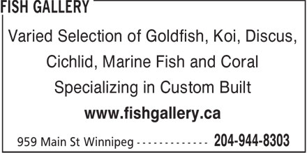 Fish Gallery (204-944-8303) - Annonce illustr&eacute;e - Varied Selection of Goldfish, Koi, Discus, Cichlid, Marine Fish and Coral Specializing in Custom Built www.fishgallery.ca  Varied Selection of Goldfish, Koi, Discus, Cichlid, Marine Fish and Coral Specializing in Custom Built www.fishgallery.ca