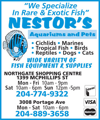 Nestor's Aquariums & Pets (204-774-9322) - Annonce illustrée - Cichlids   Marines Tropical Fish   Birds Reptiles   Dogs   Cats WIDE VARIETY OF FISH EQUIPMENT & SUPPLIES NORTHGATE SHOPPING CENTRE 1399 MCPHILLIPS ST Mon - Fri 10am - 9pm Sat 10am - 6pm Sun 12pm -5pm 204-774-9322 3008 Portage Ave Mon - Sat 10am - 6pm 204-889-3658 We Specialize In Rare & Exotic Fish Cichlids   Marines Tropical Fish   Birds Reptiles   Dogs   Cats WIDE VARIETY OF FISH EQUIPMENT & SUPPLIES NORTHGATE SHOPPING CENTRE 1399 MCPHILLIPS ST Mon - Fri 10am - 9pm Sat 10am - 6pm Sun 12pm -5pm 204-774-9322 3008 Portage Ave Mon - Sat 10am - 6pm In Rare & Exotic Fish 204-889-3658 We Specialize